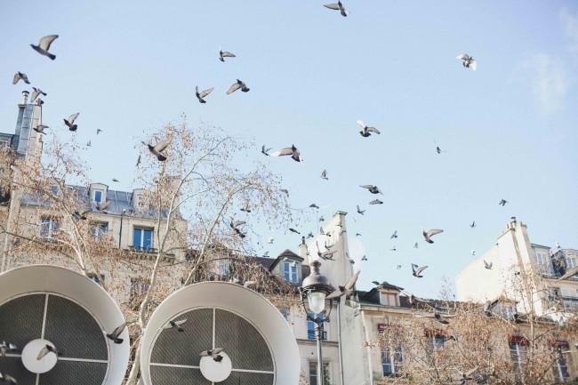 Amoureuses à Paris (38)